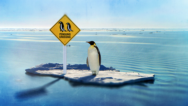 lonely-penguin-crossing.jpg